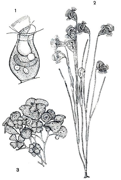 Фикус бенгальский: уход и некоторые особенности растения